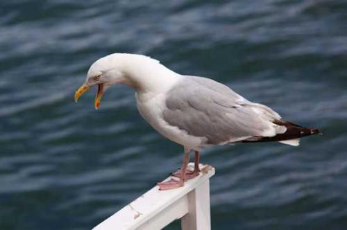 10 птиц,которых стоит опасаться (10 фото)