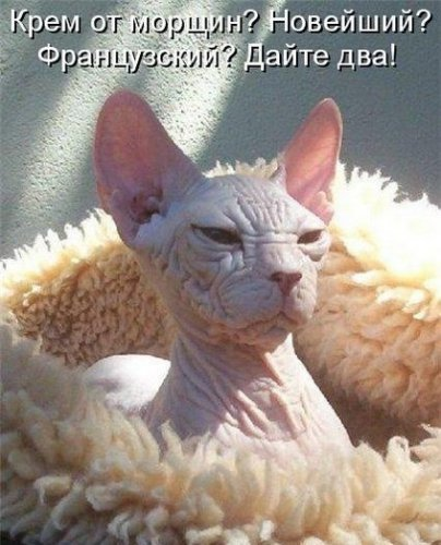 Смешные животные в котоматрице (30 фото)