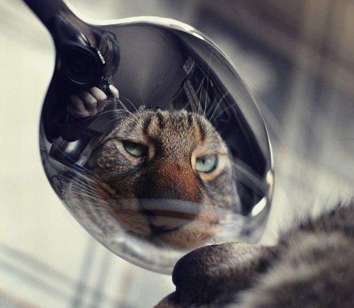 Забавные фото животных (25 фото)