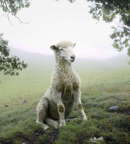 Красивые фотографии животных (10 фото)
