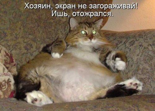 Котейки из котоматрицы (30 фото)