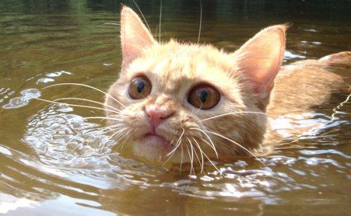 Животные-пловцы (35 фото)