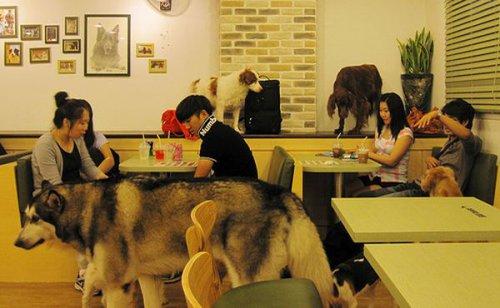 Собачье кафе в Сеуле (9 фото+видео)