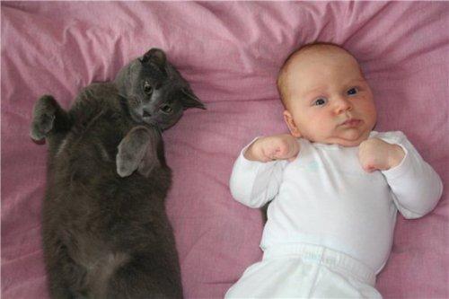 Домашние животные и рождение ребенка