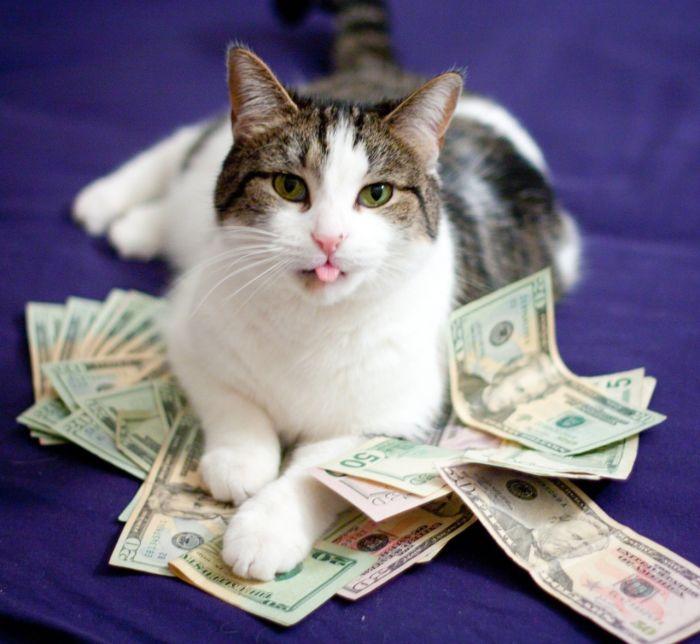 Смешные картинки денег хочу