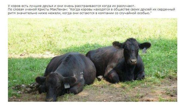 У животных тоже есть душа... (13 фото)