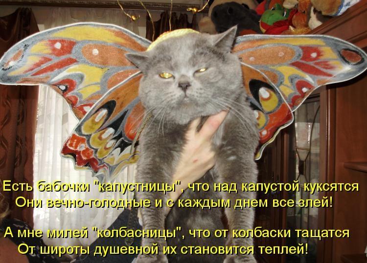 Картинки бабочки с надписями