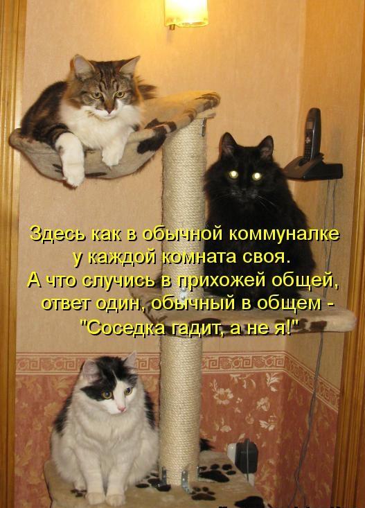 Как сделать чтобы кошки не гадили на грядках