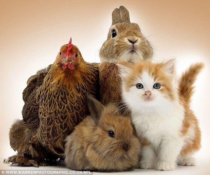есть снимать красивой фотографии кошки кроликов самоздрав