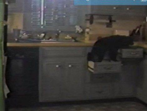 Преступление собаки на кухне