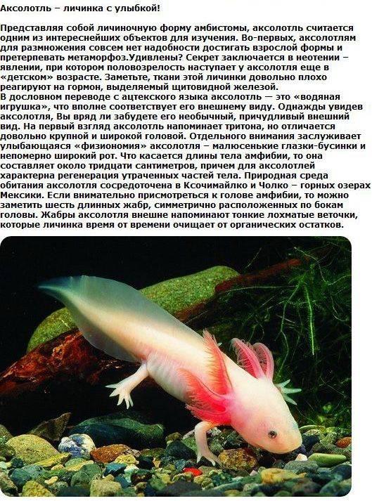 Необычные животные (24 фото)