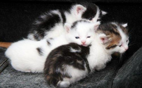 Котята-везунчики (6 фото)