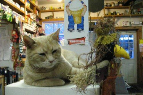 Мэнский кот стал почетным мэром города в Аляске (3 фото)