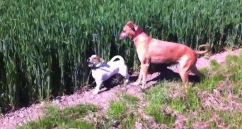 Юмор: Собака-попрыгушка