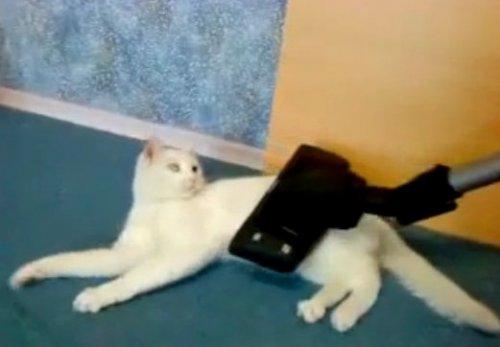 Странный кот - любитель пылесоса