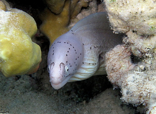 Жизнь под водой (22 фото)