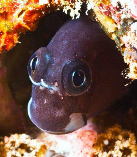 Красота обитателей подводного мира (30 фото)