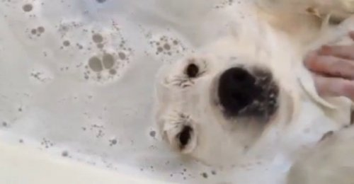 Позитивный пёс принимает ванну