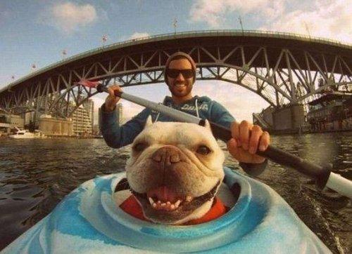 Юмор:Собаки-улыбаки (24 фото)