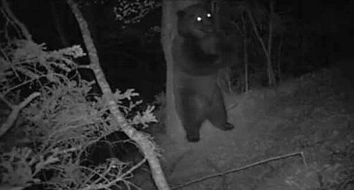 Юмор: Танцующий медведь