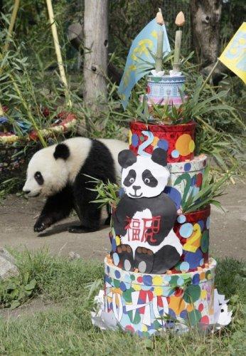 Панда празднует свой день рождения (6 фото)