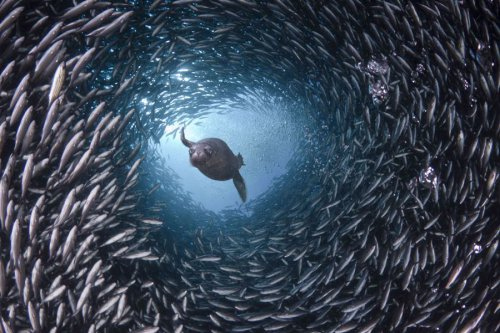 Подводный мир в фотографиях Дэвида Флитэма (15 фото)
