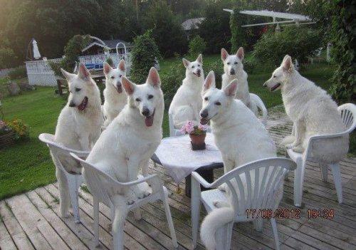Смешные и забавные животные (38 фото)
