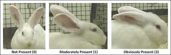 Как узнать у зверя, сильно ли у него болит (2 фото)