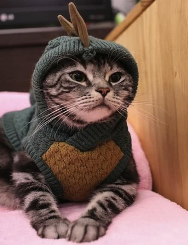 Коты в костюмах фото