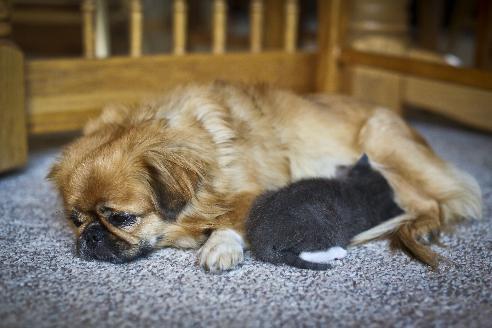 Собака выкормила котёнка (4 фото)