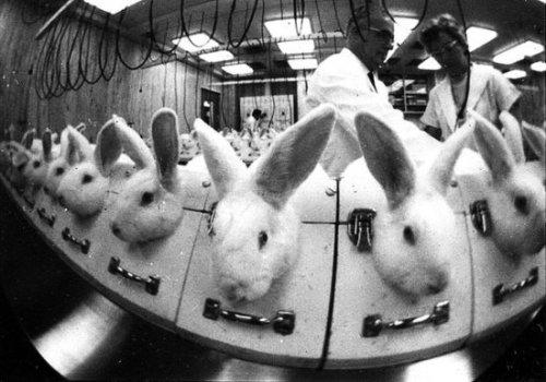 Тесты на животных: помада или жизнь?