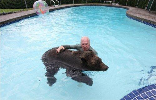 Семья из Ванкувера держит у себя дома медведя (9 фото)