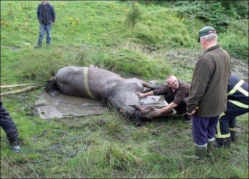 Спасение коня из трясины (7 фото)