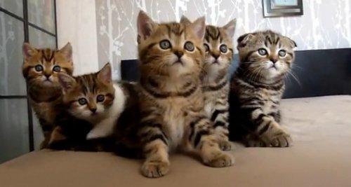 Танцующие котята
