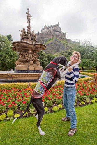 Дог по кличке Купер - самая большая собака в мире (5 фото+видео)