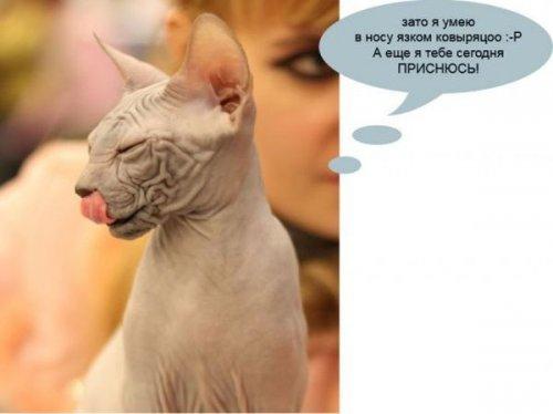 О чём думают коты на выставках (27 фото)