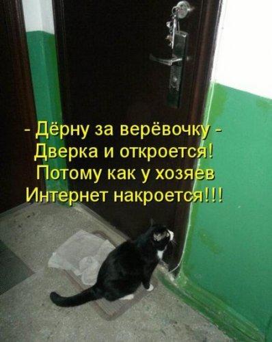 Весёлая котоматрица (35 фото)
