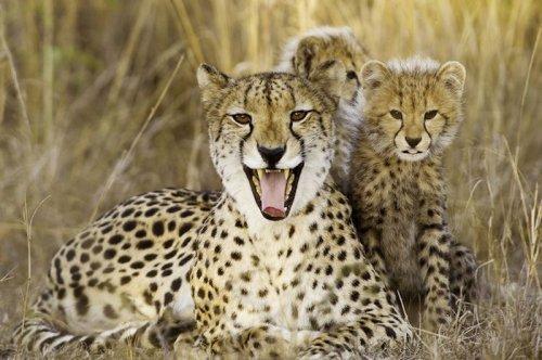 Десять лучших фотографий от  National Geographic  (10 фото)