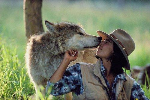 Шесть лет жизни с волками (16 фото)