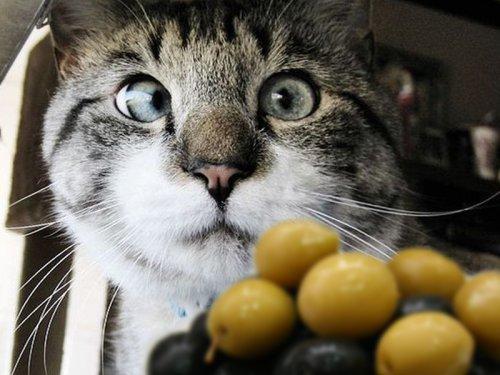 Кот опьянел,поев зелёных оливок