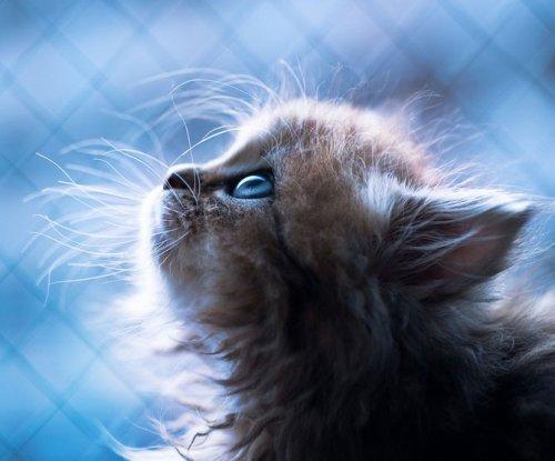 Кошко-позитив (40 фото)