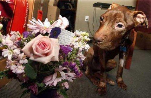 Возвращение к жизни, или история спасения выброшенного в мусоропровод пса (24 фото)