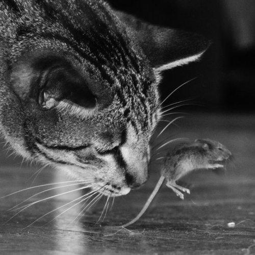 """Кот и мышка"" (6 фото)"