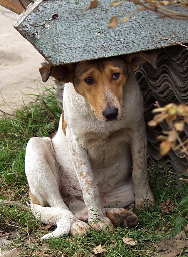 Жалостливые животные картинки