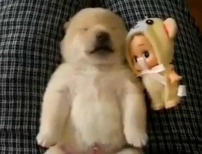 Юмор:Спящие собаки