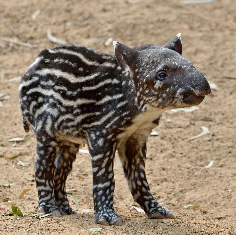 фотографии самых редких животных совершал
