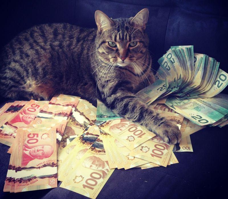 Картинки кошки с деньгами