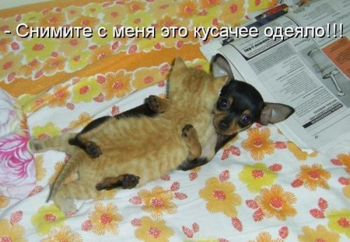 Прикольная котоматрица (35 фото)