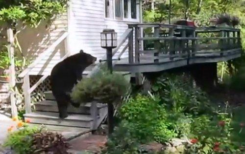 Женщина прогнала дикого медведя, накричав на него