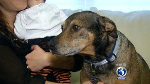 Пёс из приюта спас от гибели ребенка
